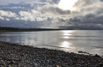 Fisk i fjorden